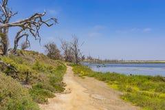 Free Tidal Pool Walking Path Stock Images - 73573954