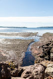 Tidal Pools on Canadian Coast Royalty Free Stock Images