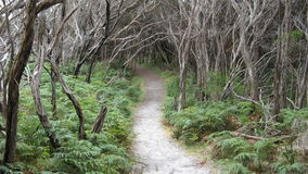 Tidal River Walking Track Stock Images