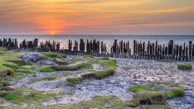 Tidal Salt Marsh Waddensea Stock Image