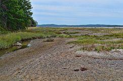 Tidal zone on Sears Island in Maine royalty free stock image
