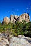 Tidbinbilla naturreserv, Australien royaltyfri fotografi