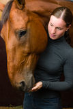 Tidbit to horse Stock Photo