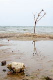 Tide on the North Sea. A tree is on the low tide on the North Sea Stock Images