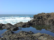 Tide pool. S on the Mendocino, California coast Royalty Free Stock Photos