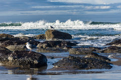 Tide pool area with seagulls Stock Photos