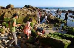 Tide pool exploration along coastline of  Laguna Beach, CA. Tide pool exploration is a popular pass time along the rocky coastline of Laguna Beach, California Stock Images