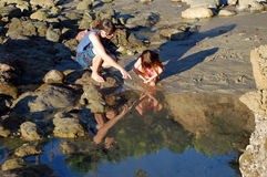 Tide pool exploration near Bird Rock, Laguna Beach, CA. Royalty Free Stock Photo