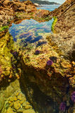 Tide pool with sea urchins and crabs Stock Image