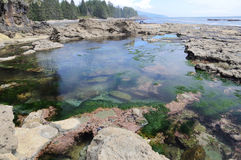 Tide pools Royalty Free Stock Images