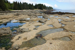 Tide pools Royalty Free Stock Image