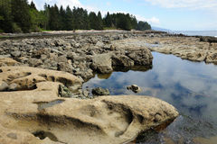 Tide pools on beach Royalty Free Stock Photography