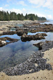 Tide pools on beach Stock Photos
