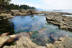 Tide pools on beach Royalty Free Stock Image