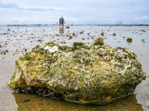 Tide pools on the beach are habitats of uniquely adaptable animal Royalty Free Stock Image