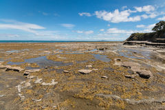 Tide pools at New Zealand coast Royalty Free Stock Images