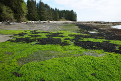 Tide pools and seagrass Royalty Free Stock Photo