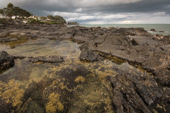 Tide pools at Takapuna beach Stock Photos