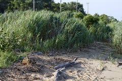 Tide's Out - Debris Left Stock Photos