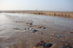 Tide and seashell stock photos