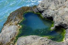 tidepool的特写镜头充满在岩石的水由海洋,为装边与绿藻类 海藻出现作为缩样 免版税库存图片