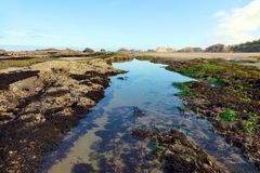 Tidepool Royalty Free Stock Photos