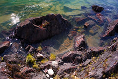 Tidepool Royalty Free Stock Images