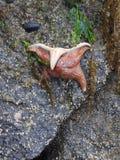 Tidepooling litoral em Alaska imagens de stock royalty free