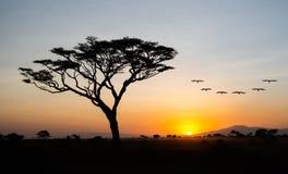 Tidig afrikansk soluppgångNgorongoro naturvårdsområde arkivfoton