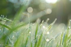 Tidig dagg på gräset Royaltyfri Foto