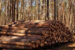 tidig fj?der En h?g av tr? efter skogklipp arkivfoton