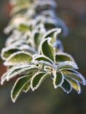 tidig frostmorgon Royaltyfri Bild