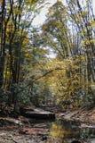 Tidig höst längs The Creek Fotografering för Bildbyråer