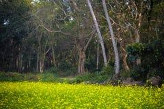 Tidig höstbygdmorgon: En sommarmorgon på den mest rena byn i Asien: Mawlynnong Meghalaya, Indien Kopieringsutrymme hyr rum för royaltyfri fotografi