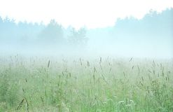 tidig karelia morgon russia Royaltyfria Bilder