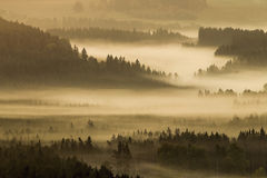 Tidig kufhöstmorgon på den tjeckiska österrikiska gränsen Arkivfoton