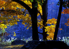 tidig ljus morgon Royaltyfri Foto