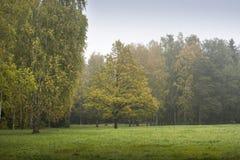 tidig skog för höst Fotografering för Bildbyråer
