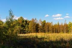 tidig skog för höst Royaltyfri Foto