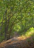 tidig skog för höst Arkivfoton