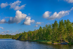 tidig sommar för lakemorgonkust Fotografering för Bildbyråer
