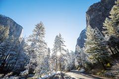 Tidig vår i Yosemite Arkivfoton