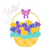 Tidig vårkrokus blommar i en korg Royaltyfria Bilder