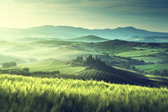 Tidig vårmorgon i Tuscany, Italien Royaltyfri Fotografi