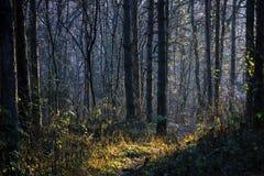 Tidig vårskog i morgonsolen Royaltyfri Fotografi