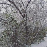 tidig vinter arkivbild
