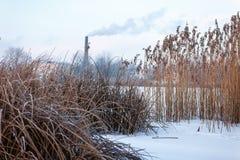 Tidig vinter kall dimmig morgon arkivfoton