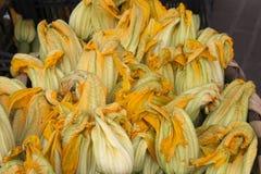 tidig zucchini för blommamorgonfjäder Arkivbilder