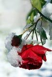 Tidiga snowfall i höst Arkivbild