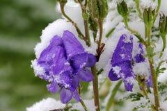 Tidiga snowfall i höst royaltyfria foton